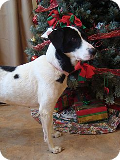 Border Collie Mix Dog for adoption in Youngwood, Pennsylvania - Lilly