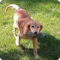 Adopt A Pet :: Paris - Denver, CO