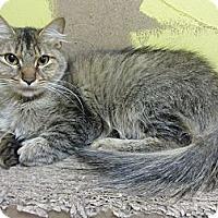 Adopt A Pet :: Quinn - Mobile, AL
