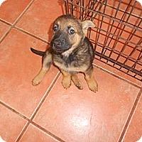 Adopt A Pet :: Chelsea - San Diego, CA