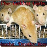 Adopt A Pet :: The Golden Girls - Las Vegas, NV