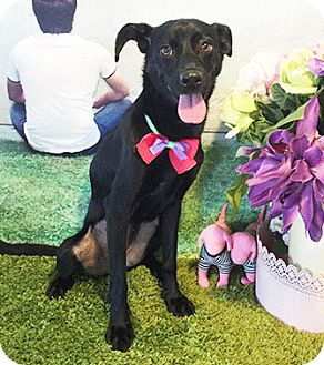 Labrador Retriever Mix Dog for adoption in Castro Valley, California - Finny