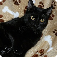 Adopt A Pet :: Venus - Middletown, OH
