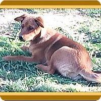 Adopt A Pet :: Elsie - Murrieta, CA