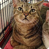 Adopt A Pet :: Charlie - Port Republic, MD