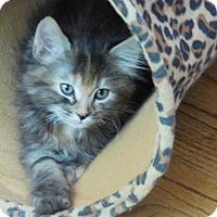 Adopt A Pet :: Michelle - Davis, CA