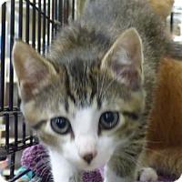 Adopt A Pet :: Dory - Logan, UT