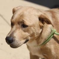 Adopt A Pet :: Gunner - Russellville, KY