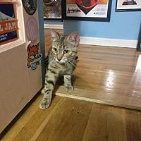 Adopt A Pet :: Ariel - New York, NY