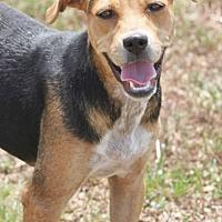 Adopt A Pet :: Chessa - Hooksett, NH