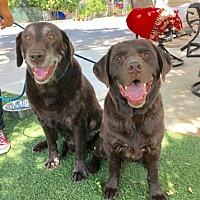 Adopt A Pet :: Jax and Zayna - Temecula, CA