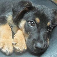 Adopt A Pet :: Paddy - Trenton, NJ