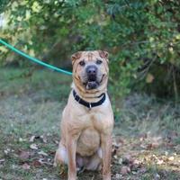 Adopt A Pet :: Nova - Elkhorn, WI