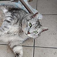 Adopt A Pet :: Nevada - Kingston, WA