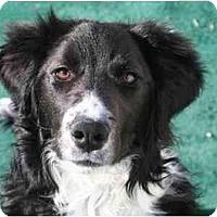 Adopt A Pet :: Bo - Glenrock, WY