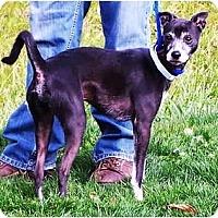 Adopt A Pet :: Spare - Toronto/Etobicoke/GTA, ON