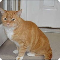 Adopt A Pet :: Cheddar - Kingston, WA