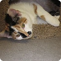 Adopt A Pet :: Lily - Warminster, PA