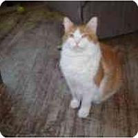 Adopt A Pet :: Zarf - North Boston, NY