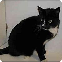 Adopt A Pet :: Maxwell - Scottsdale, AZ