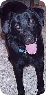 Labrador Retriever Mix Dog for adoption in Owatonna, Minnesota - Buddy