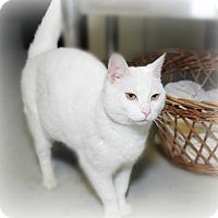 Adopt A Pet :: Shannon - Glen Mills, PA
