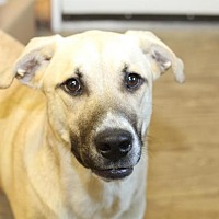 Adopt A Pet :: Beebop - Rossville, TN