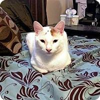 Adopt A Pet :: Yeti - Putnam, CT