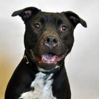 Adopt A Pet :: Maximus - Wantagh, NY