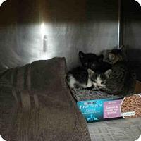 Adopt A Pet :: *PENNE - Austin, TX