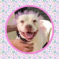 Adopt A Pet :: SCARLET - Chico, CA