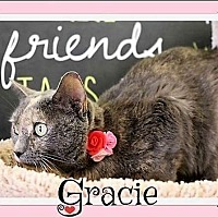 Adopt A Pet :: Gracie - Arlington, TX