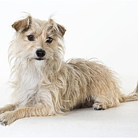 Adopt A Pet :: Rascal - Monterey, CA
