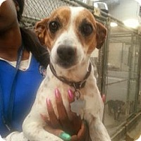 Adopt A Pet :: SAMANTHA - Sugar Land, TX