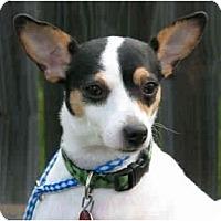 Adopt A Pet :: Topaya - Kingwood, TX