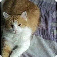 Adopt A Pet :: Dallas - Montreal, QC