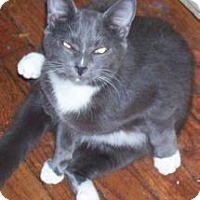 Adopt A Pet :: Blue Boy - Salisbury, NC