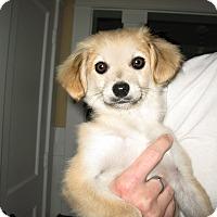 Adopt A Pet :: Sunny - Houston, TX