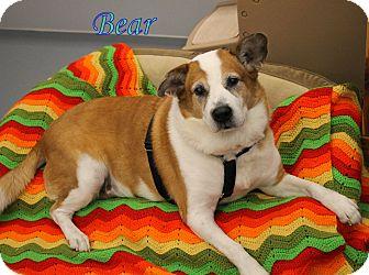 Corgi Mix Dog for adoption in Winter Haven, Florida - Bear