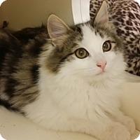 Adopt A Pet :: Patches - San Fernando Valley, CA