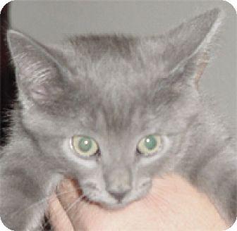 Domestic Mediumhair Kitten for adoption in Garland, Texas - Cutie
