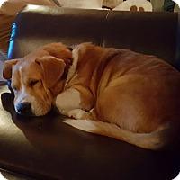 Adopt A Pet :: Barney - Freeport, NY