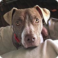 Adopt A Pet :: Richie - Dripping Springs, TX