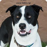 Adopt A Pet :: Orion - Cheyenne, WY