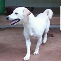 Adopt A Pet :: Cooper - Oakton, VA