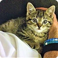 Adopt A Pet :: Diana - Burbank, CA