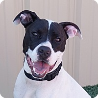 Adopt A Pet :: Marshall - Columbia, IL