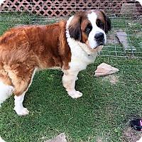 Adopt A Pet :: Fred - McKinney, TX