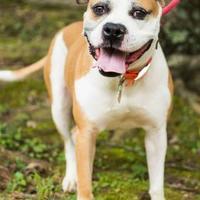 Adopt A Pet :: Ali - Auburn, AL