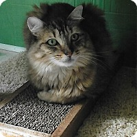 Adopt A Pet :: Luna - Medway, MA